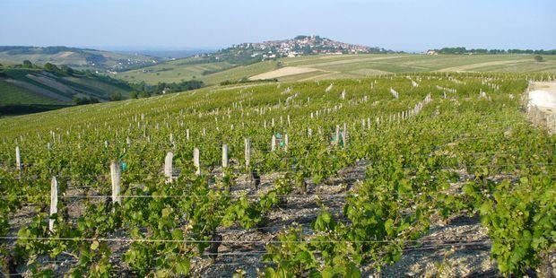Comment les vins auvergnats renaissent après avoir frôlé la disparition