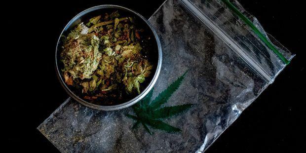 """Trois maires LR jugent dans cette tribune que la légalisation de la consommation du cannabis est """"indispensable""""."""