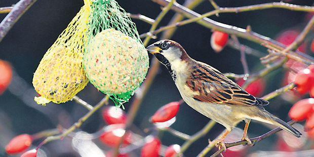"""Nourrir les oiseaux sauvages, """"un antidépresseur gratuit"""""""