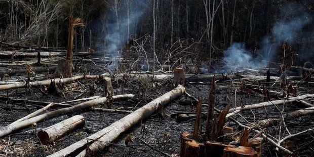 Brésil : Bolsonaro accuse sans preuve les ONG d'être responsables des incendies qui ravagent l'Amazonie