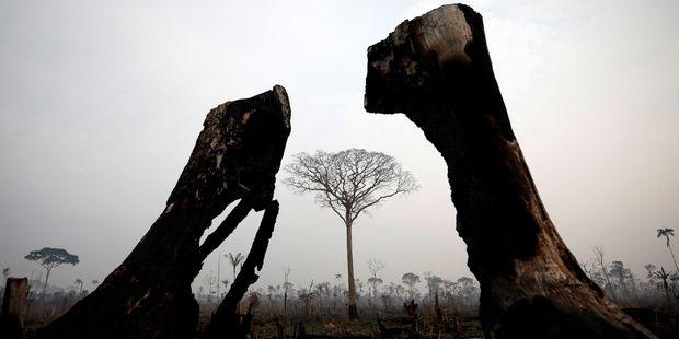 TRIBUNE. Annick Girardin et des élus de Guyane réclament un fonds international pour l'Amazonie
