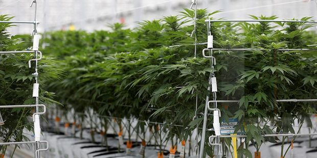 Le cannabis représente une manne pour les investisseurs.