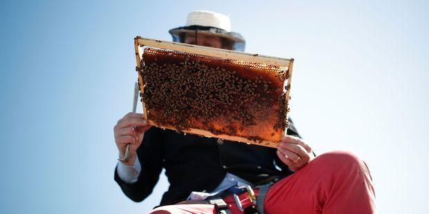 Notre-Dame : les 200.000 abeilles des ruches de la cathédrale ont survécu à l'incendie